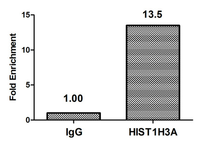 Chromatin Immunoprecipitation(ChIP) - Butyrly-HIST1H3A (K122) Antibody