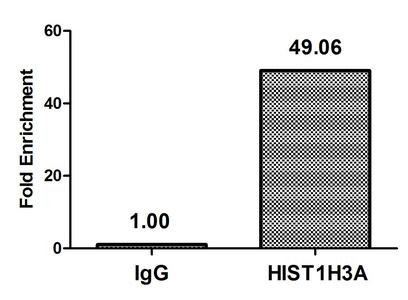 Chromatin Immunoprecipitation(ChIP) - 2-hydroxyisobutyryl-HIST1H3A (K14) Antibody