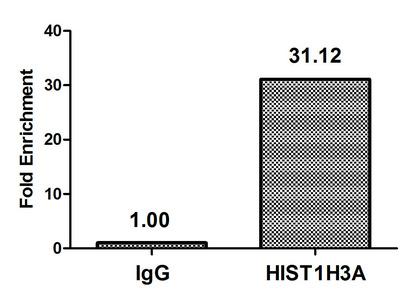 Chromatin Immunoprecipitation(ChIP) - β-hydroxybutyryl-HIST1H3A (K18) Antibody