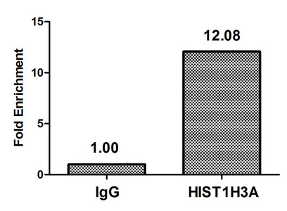 Chromatin Immunoprecipitation(ChIP) - Phospho-HIST1H3A (S28) Antibody