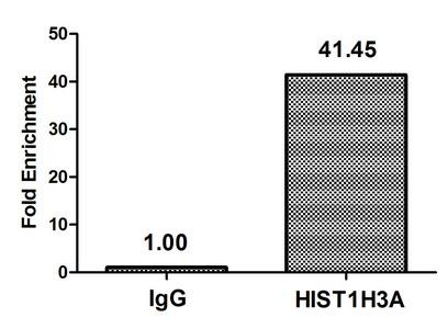 Chromatin Immunoprecipitation(ChIP) - HIST1H3A (Ab-37) Antibody