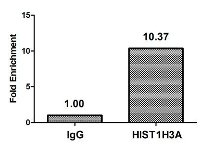 Chromatin Immunoprecipitation(ChIP) - Acetyl-HIST1H3A (K9) Antibody