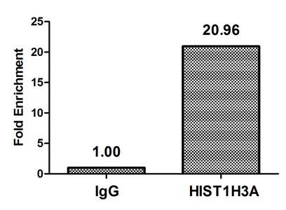 Chromatin Immunoprecipitation(ChIP) - HIST1H3A (Ab-9) Antibody