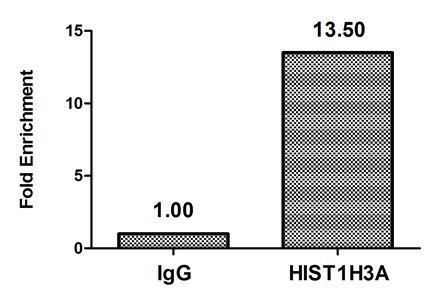 Chromatin Immunoprecipitation(ChIP) - 2-hydroxyisobutyryl-HIST1H3A (K18) Antibody