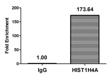 Chromatin Immunoprecipitation(ChIP) - Butyrly-HIST1H4A (K5) Antibody