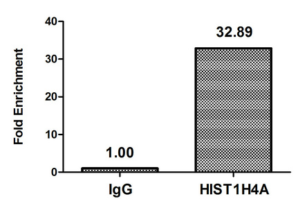 Chromatin Immunoprecipitation(ChIP) - Mono-methyl-HIST1H4A (K5) Antibody