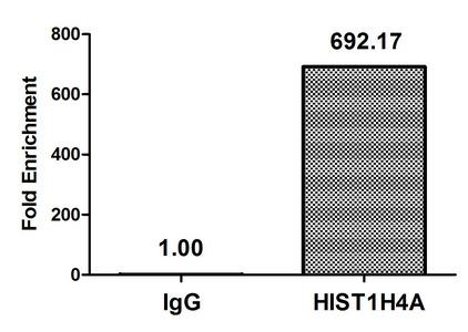 Chromatin Immunoprecipitation(ChIP) - Propionyl-HIST1H4A (K5) Antibody