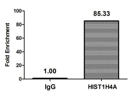 Chromatin Immunoprecipitation(ChIP) - Crotonyl-HIST1H4A (K8) Antibody