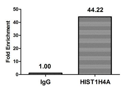 Chromatin Immunoprecipitation(ChIP) - Butyrly-HIST1H4A (K12) Antibody
