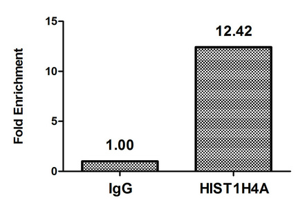 Chromatin Immunoprecipitation(ChIP) - Butyrly-HIST1H4A (K16) Antibody