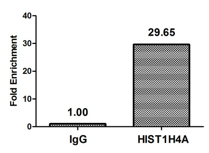 Chromatin Immunoprecipitation(ChIP) - Propionyl-HIST1H4A (K16) Antibody