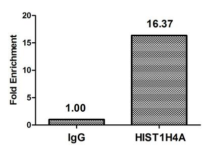 Chromatin Immunoprecipitation(ChIP) - Formyl-HIST1H4A (K77) Antibody