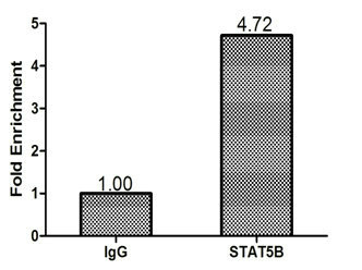 Chromatin Immunoprecipitation(ChIP) - STAT5B Antibody