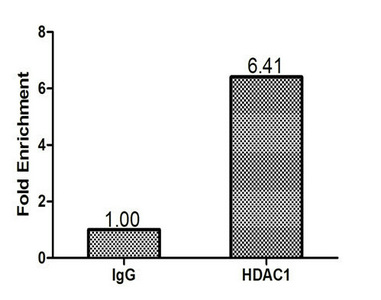 Chromatin Immunoprecipitation(ChIP) - HDAC1 Antibody