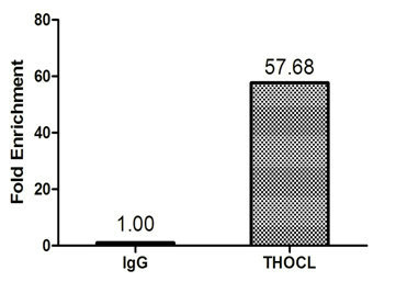 Chromatin Immunoprecipitation(ChIP) - THOC1 Antibody