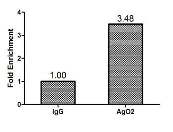 Chromatin Immunoprecipitation(ChIP) - AGO2 Antibody