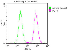Flow Cytometry(FC) 1- OCT4 Monoclonal Antibody