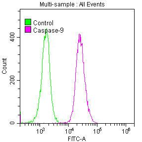 Flow Cytometry(FC) - CASP9 Antibody