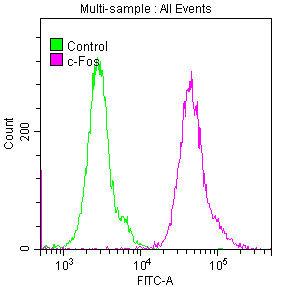 Flow Cytometry(FC) - FOS Antibody