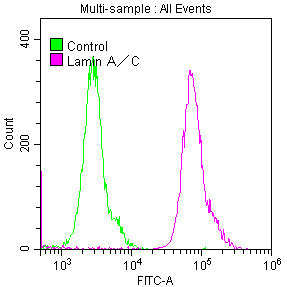 Flow Cytometry(FC) - LMNA Antibody