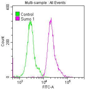 Flow Cytometry(FC) - SUMO1 Antibody