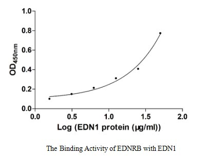 binding activity- Recombinant protein Human EDNRB