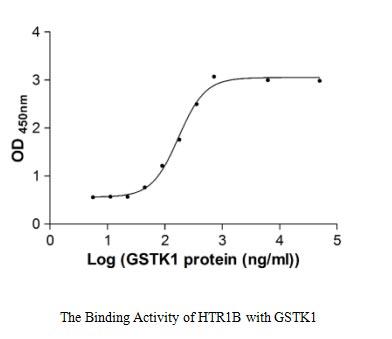 binding activity- Recombinant protein Human HTR1B