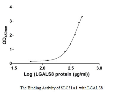 binding activity- Recombinant protein Human SLC31A1