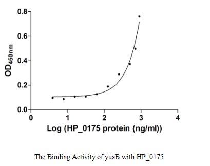 binding activity- Recombinant protein Bacillus yuaB