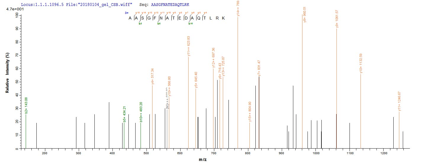 LC-MS Analysis 2- Recombinant protein Mouse Anxa4