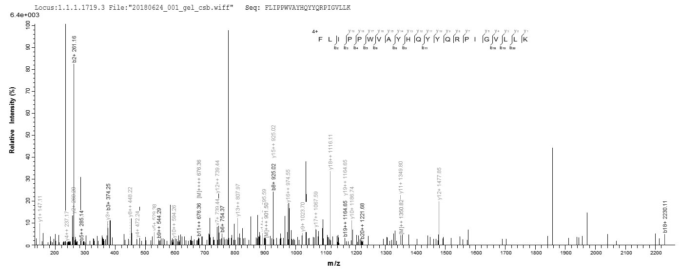 LC-MS Analysis 2- Recombinant protein Human CYP11A1