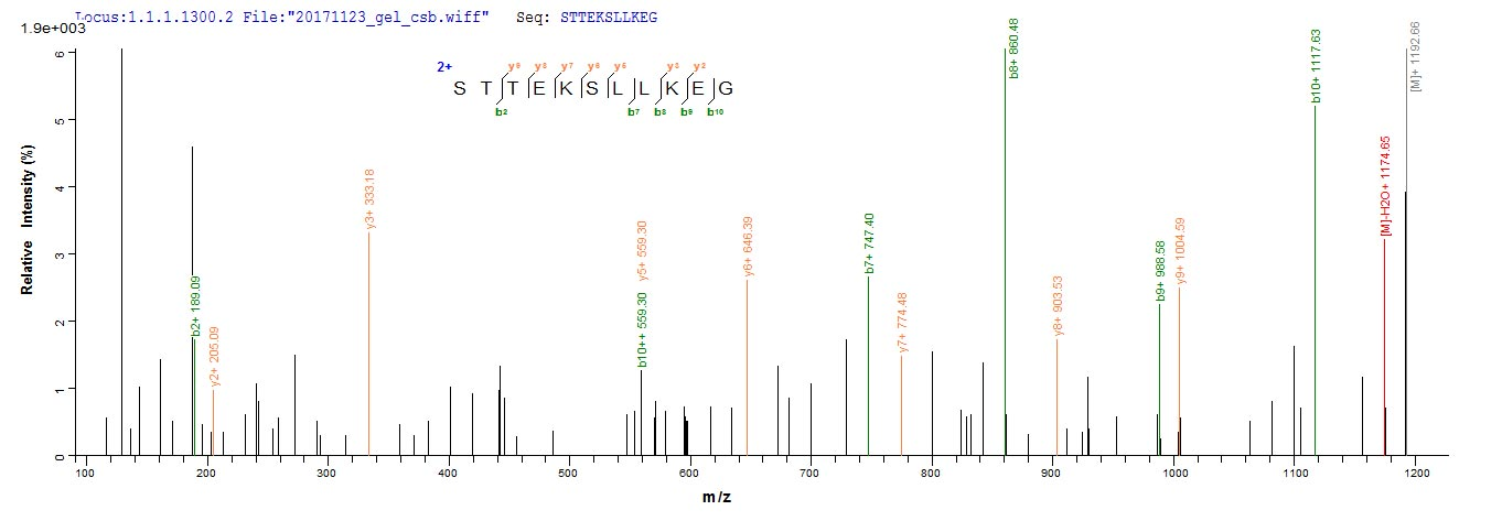 LC-MS Analysis 2- Recombinant protein Human IDO1