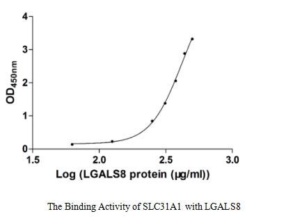 binding activity- Recombinant protein Human LGALS8