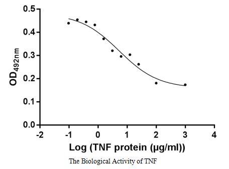 binding activity- Recombinant protein Human TNF